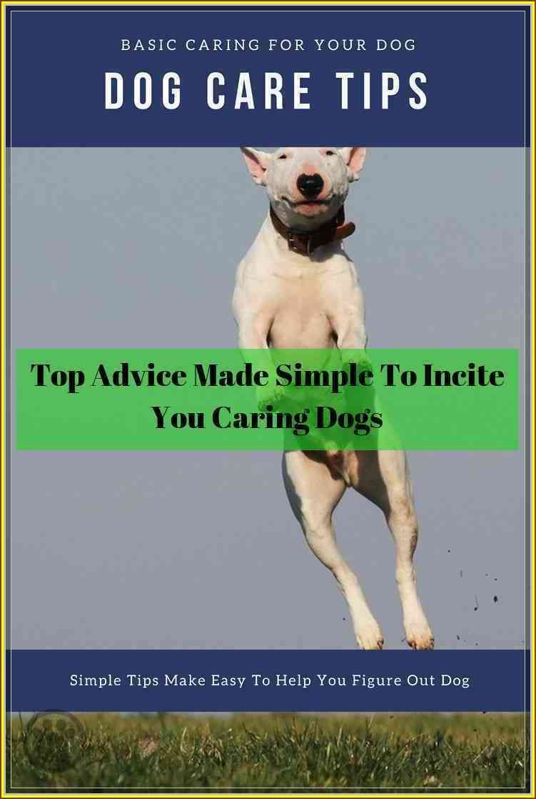 Follow This Great Dog Care Guide To Help You Training