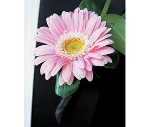 Gerbera Daisy in Classic Pink - Bouonniere