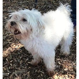 Milo Woof Animal Rescue Fremont California Pets Overstock Com Animals Animal Sanctuary Animal Society