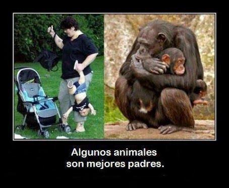 Algunos animales son mejores padres