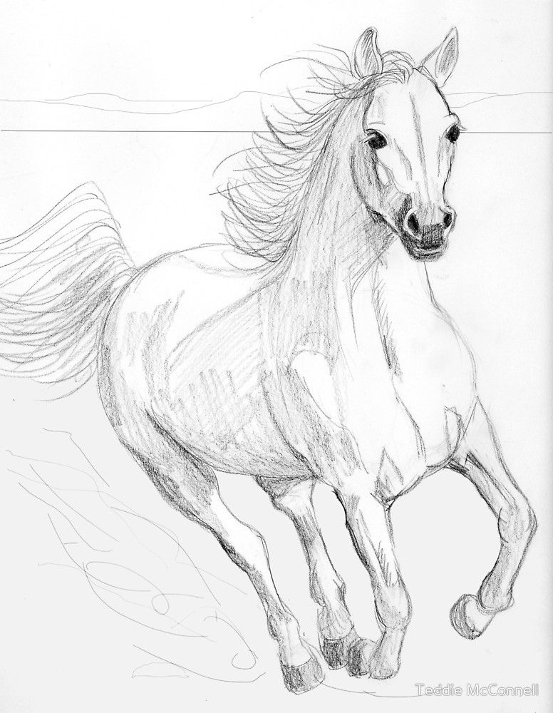 Running arabian horse pencil drawing by teddie mcconnell