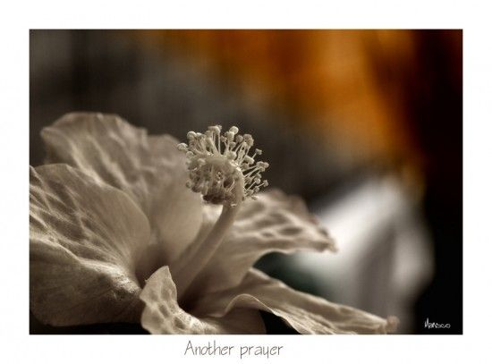 Another Prayer  by Elizabeth Mansco