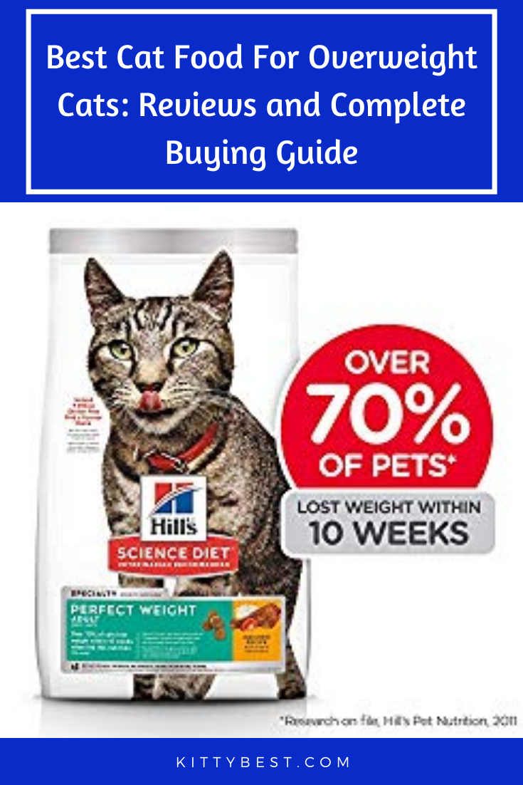 Science Diet Feeding Chart Cat : science, feeding, chart, Overweight, Cats:, Reviews, Complete, Buying, Guide, Food,, Cats,