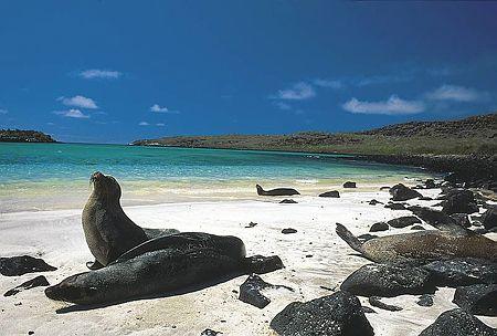 Galapagos Islands,Ecuador