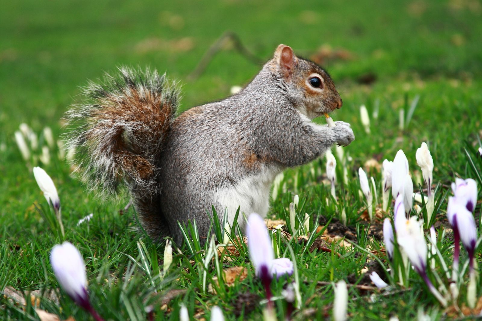 Home remedies keep those pesky rabbits and squirrels out