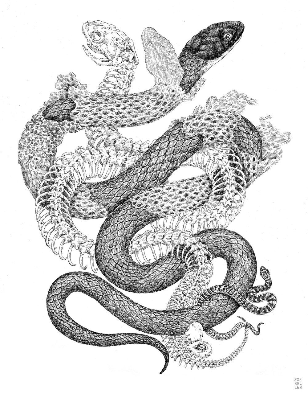 It is a picture of Delicate Snake Skin Drawing