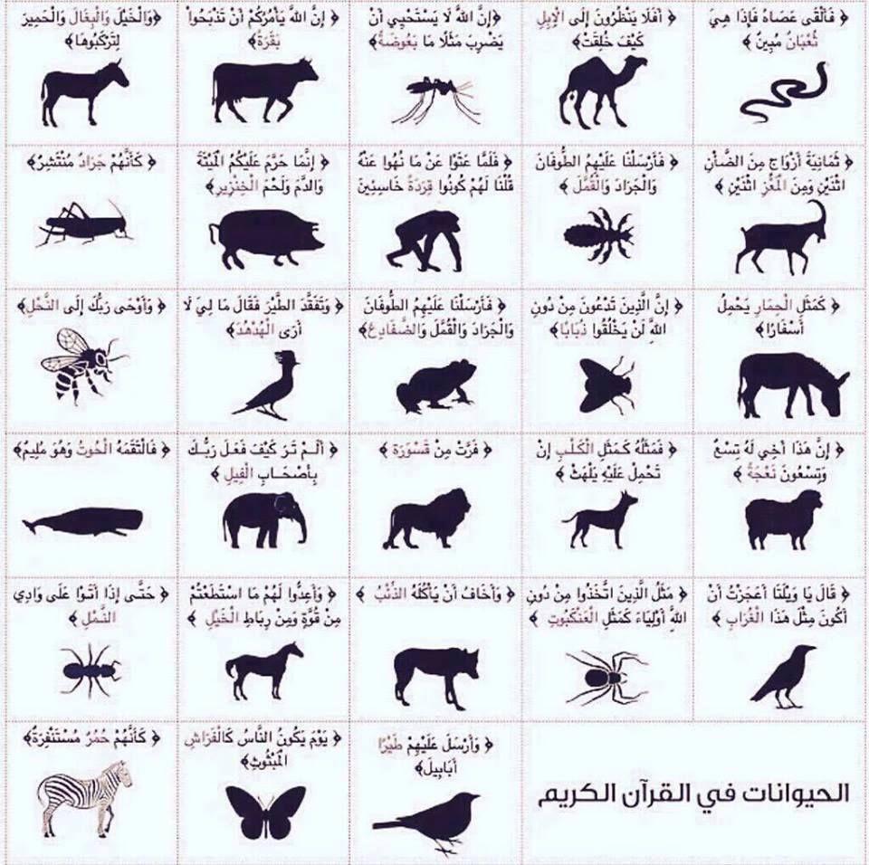 الطيور والحيوانات التي ذكرت في القرآن الكريم Islamic Art Calligraphy Learn Islam Quran Quotes Love