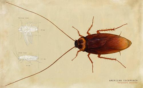 Joris De Raedt is wetenschappelijk illustrator. In