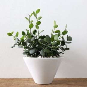 Plantes vertes intérieur faciles à entretenir : sélection de 20 ...
