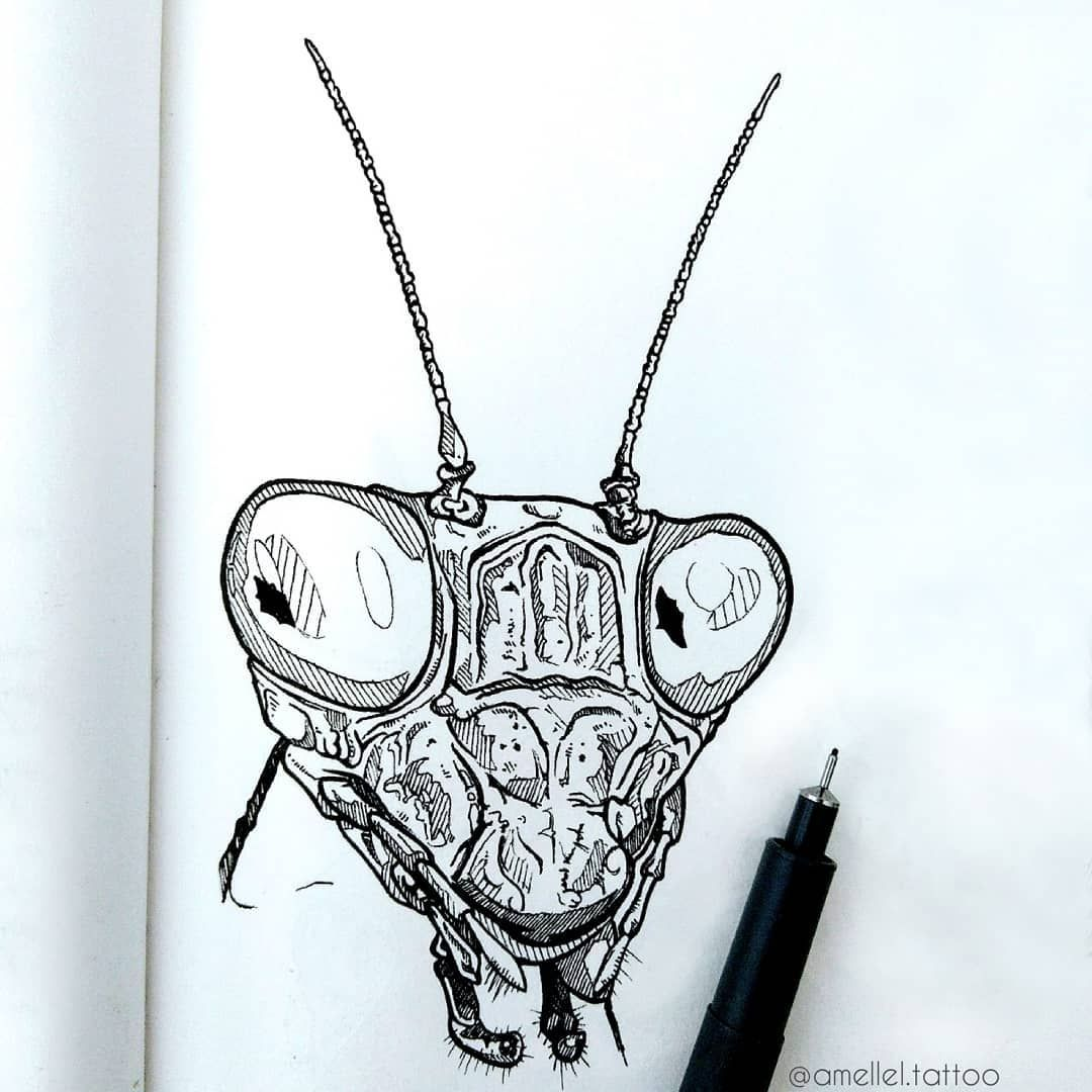 🐜 - Mante Religieuse - 🐜 Elles ont des têtes d'aliens non? Cet insecte m'a toujours fait flipper! . . . #art #drawing #illustration #artist #tattoo #sketch #artwork #draw #instaart #passion #artoftheday #blackwork #instatattoo #pencilart #inklife #artistsofinstagram #inkdrawing #artgram #instaartwork #daylisketch #tattoolovers #tttism #insect #naturelovers #alien #savetheplanet #mantis #bugs #prayingmantis #realism
