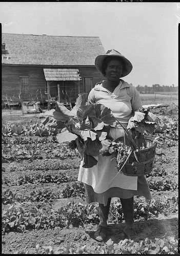 awesome African-American Woman Picking Vegetables from a Garden / http://www.everydaygardening.net/african-american-woman-picking-vegetables-from-a-garden/