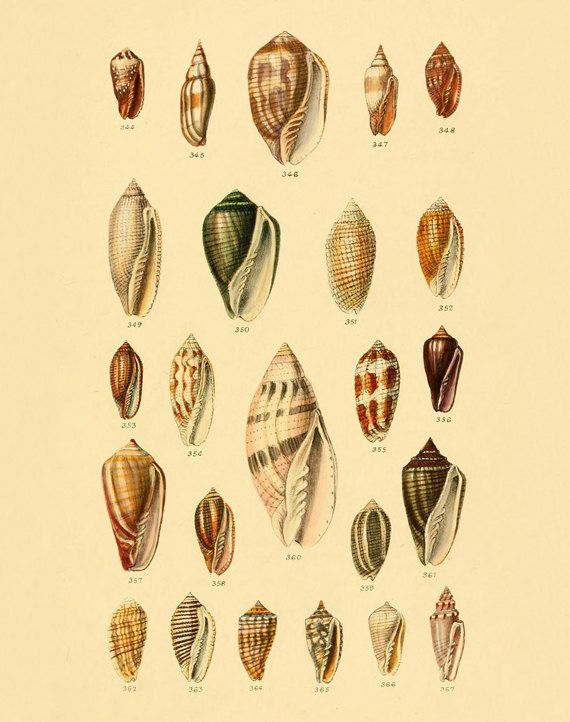vintage shells print