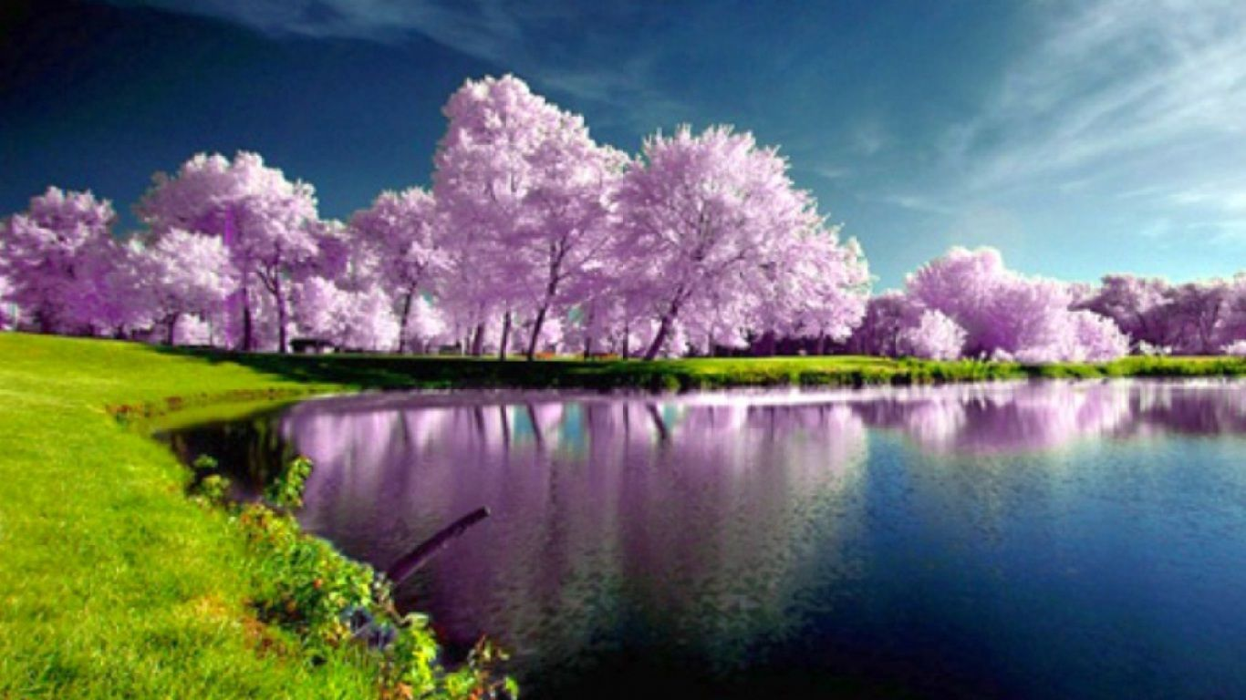 Download Cool Beautiful Trees Spring Hd Lake Another Spring