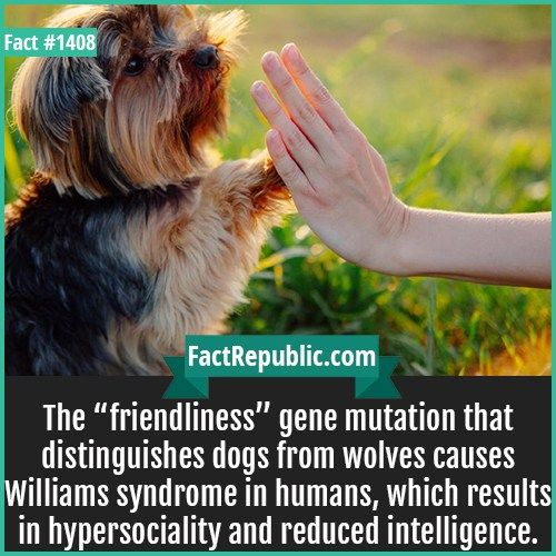 Fact Cards (With images)   Facts Williams syndrome ...