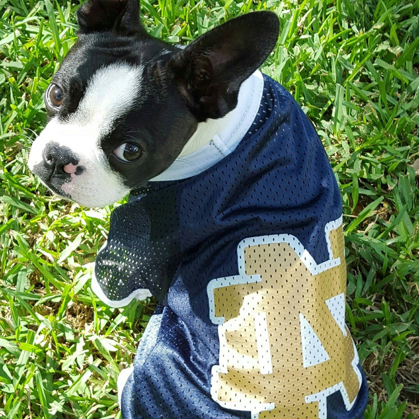 Notre Dame Dog Jersey from GAMEDAY DOGS.  7e027f172