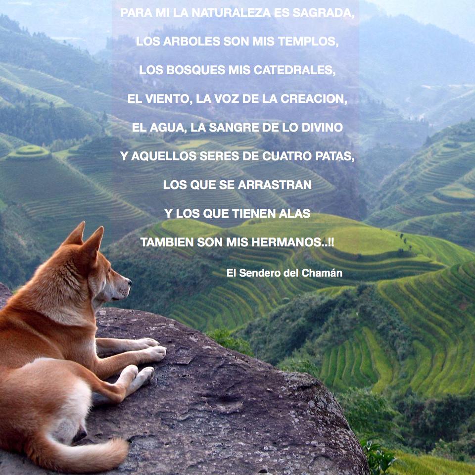Naturaleza Sagrada Frases Lo Que Me Contó El Chaman El