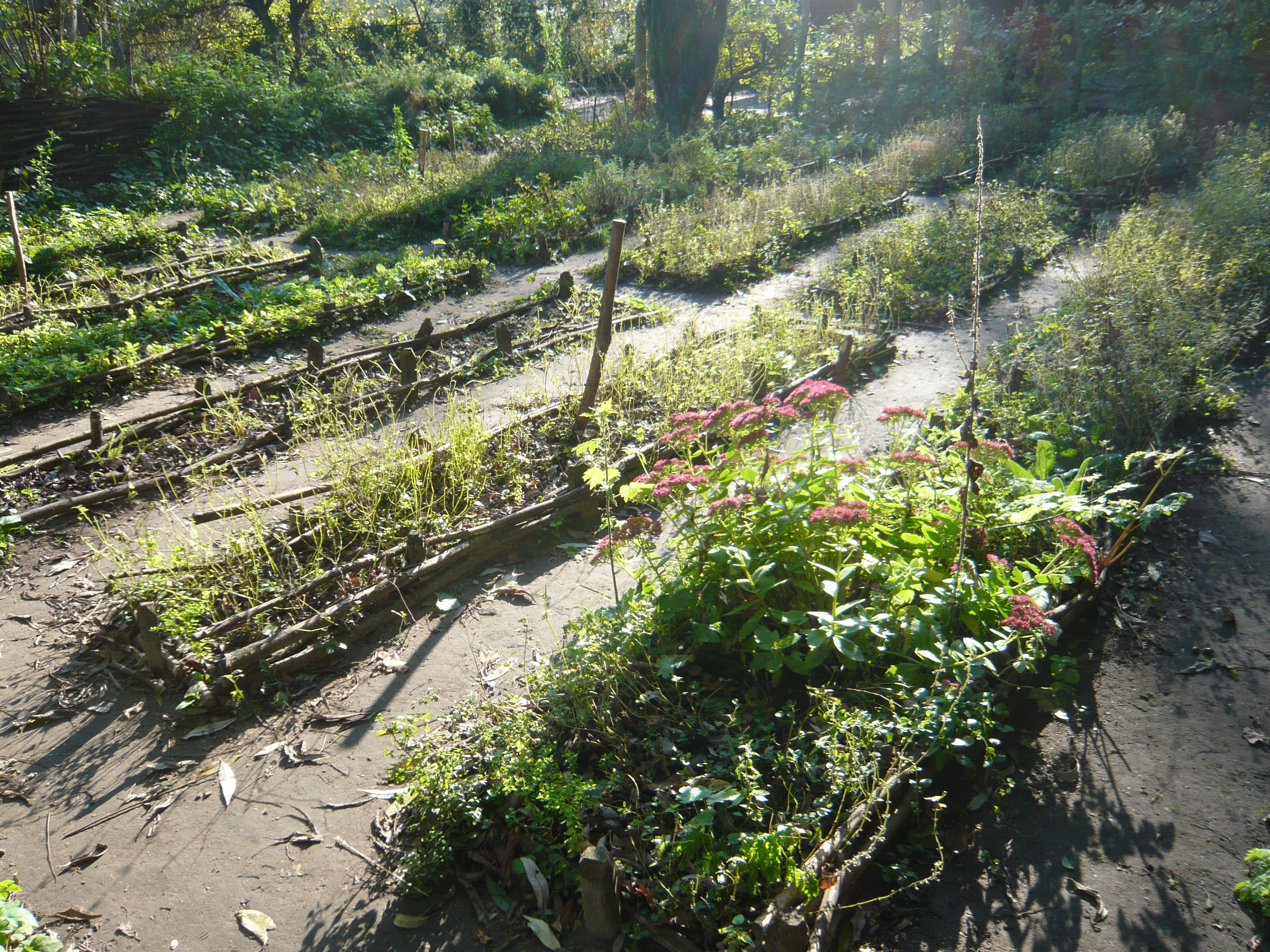 The medieval kitchen garden. Elditha had one of these at