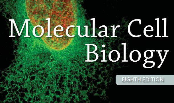 Molecular Cell Biology Lodish 8th Edition Pdf Download Pdf Outlet