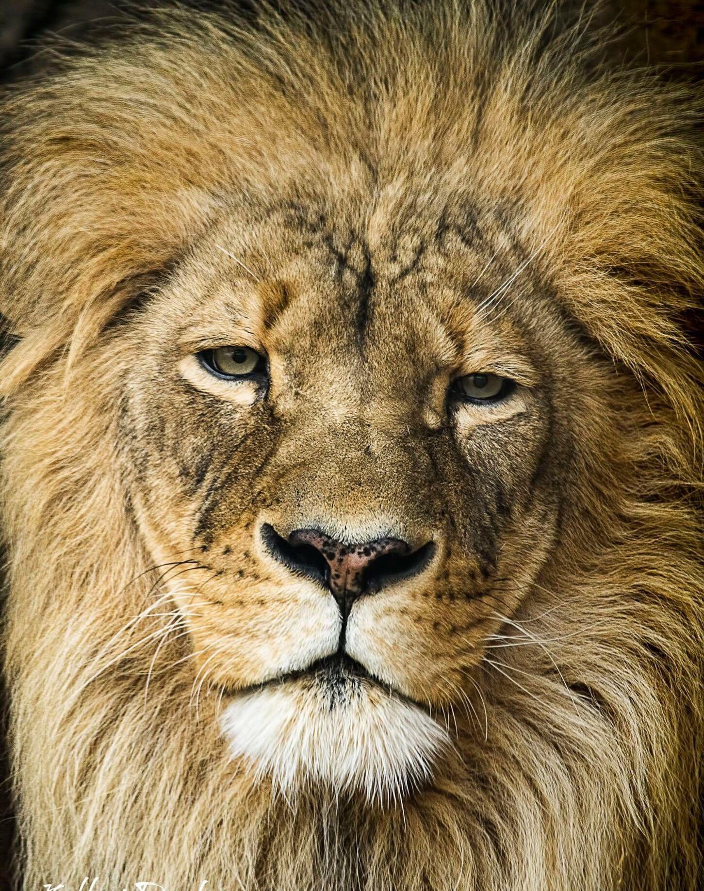 Luxe Dessin à Imprimer Roi Lion