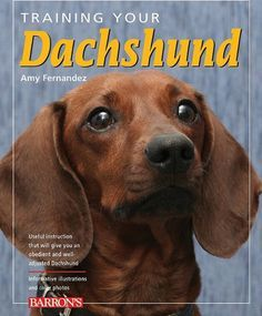 How To Potty Train A Dachshund Puppy Training Your Dog Easiest