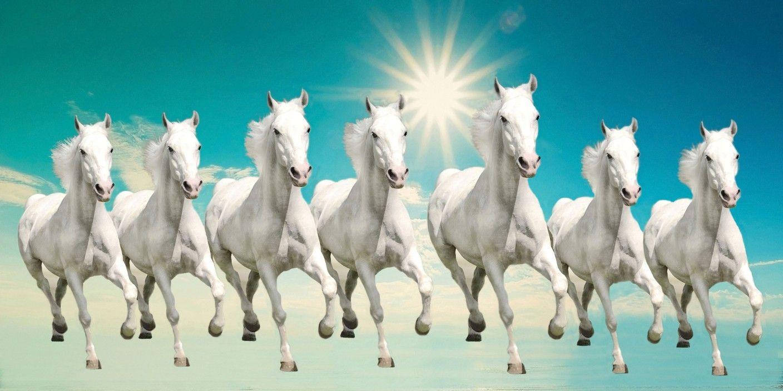 Seven Horse Images Hd | Walljdi.org