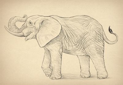 Elephants Are A One Of A Kind There S No Other Animal With Such Amazing Tusks And Trunk They Can Be Also Tricky To Elephant Drawing Elephant Animal Drawings
