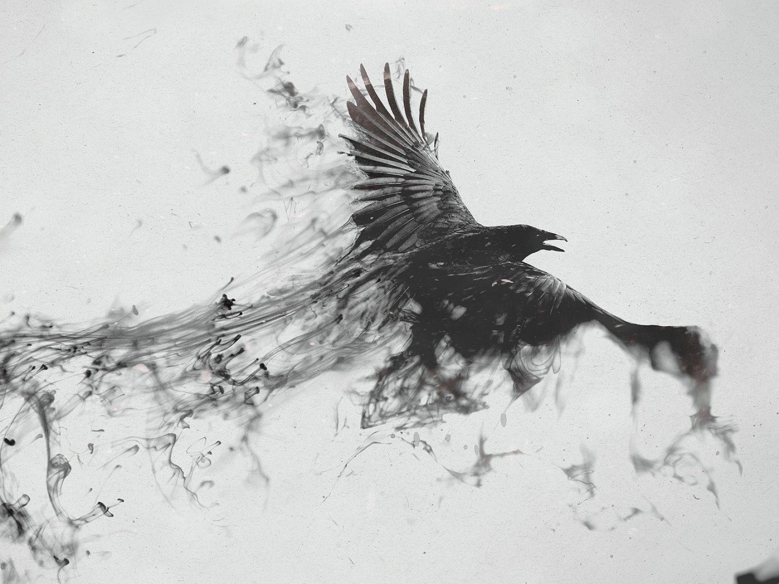 Download Wallpaper 1600x1200 Raven Bird Flying Smoke Black White 1600x1200 Hd Background Smoke Art Smoke Drawing Crow Tattoo