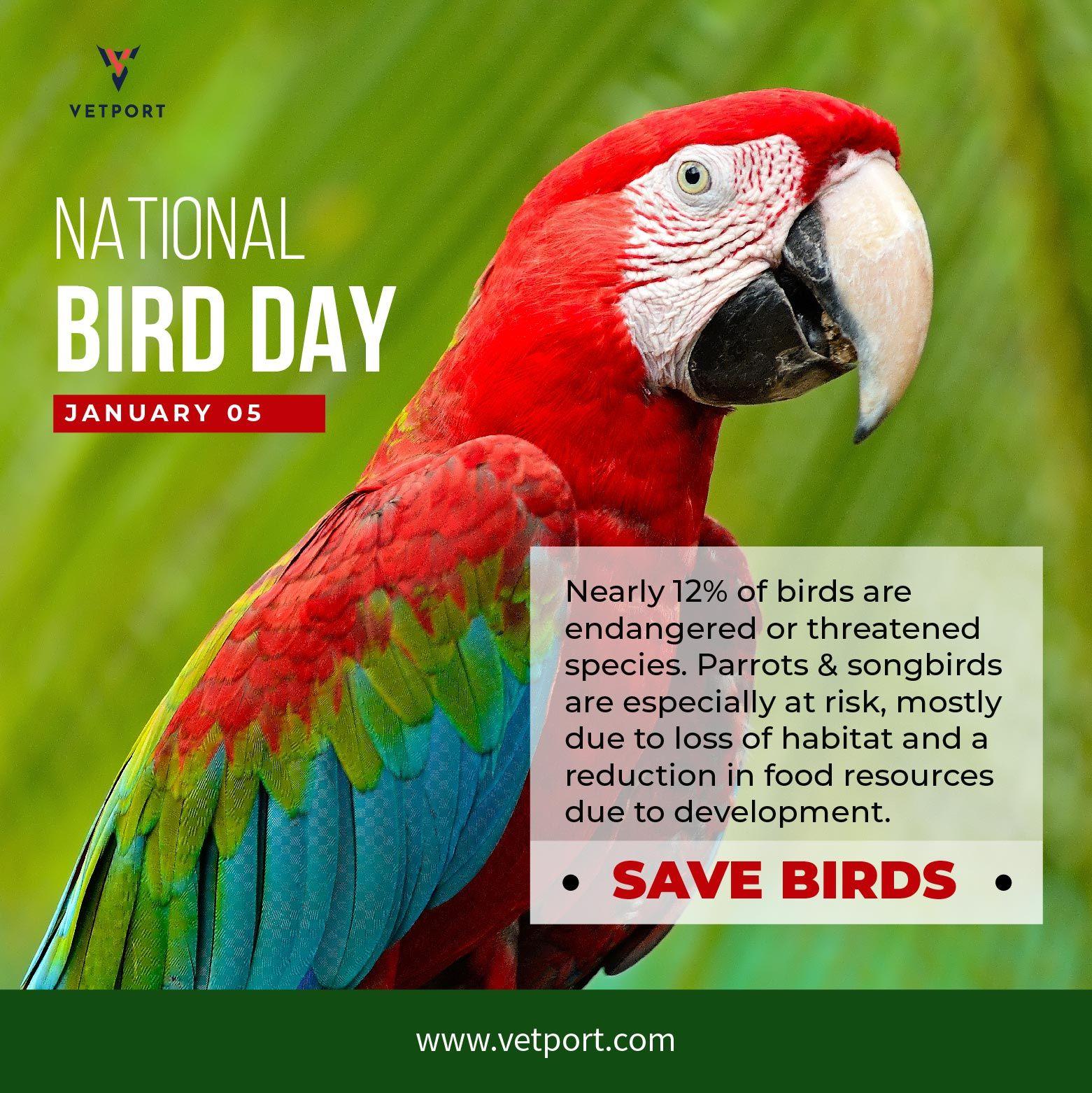 National Bird Day 2019 Veterinary Bird Day