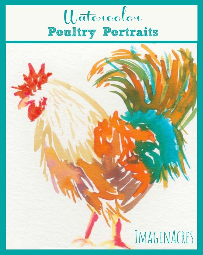 After taking a few classes on watercolor, I wanted to practice what I'd learned. So of course I made poultry portraits of our flock of insane chickens.
