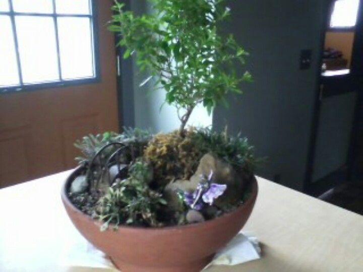 Fairie dish garden with images dish garden garden plants