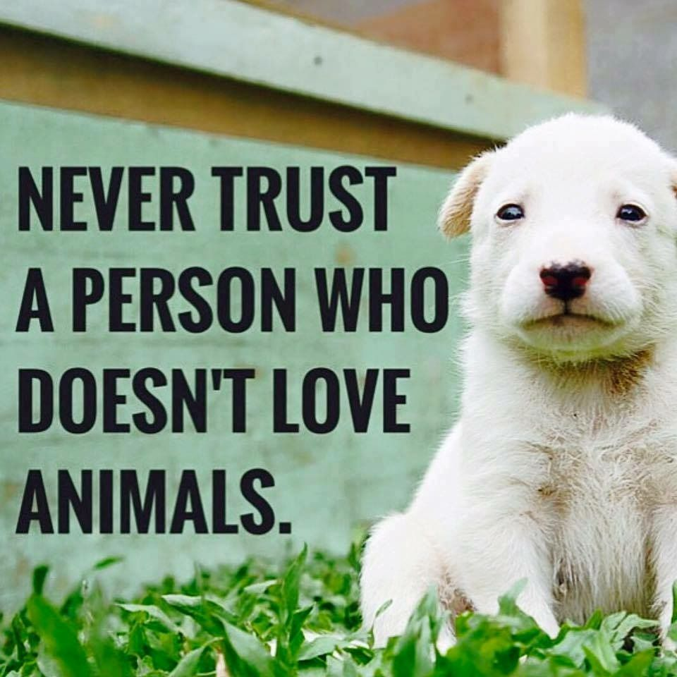 Love Animal Quotes Truth  Quotes  Serious  Pinterest  Truths And Animal