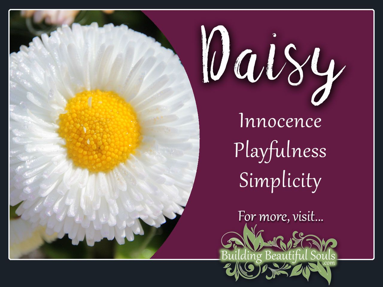 Daisy Meaning Symbolism Flower Meanings Symboiism Daisy Meaning Flower Meanings Unique Wedding Flowers