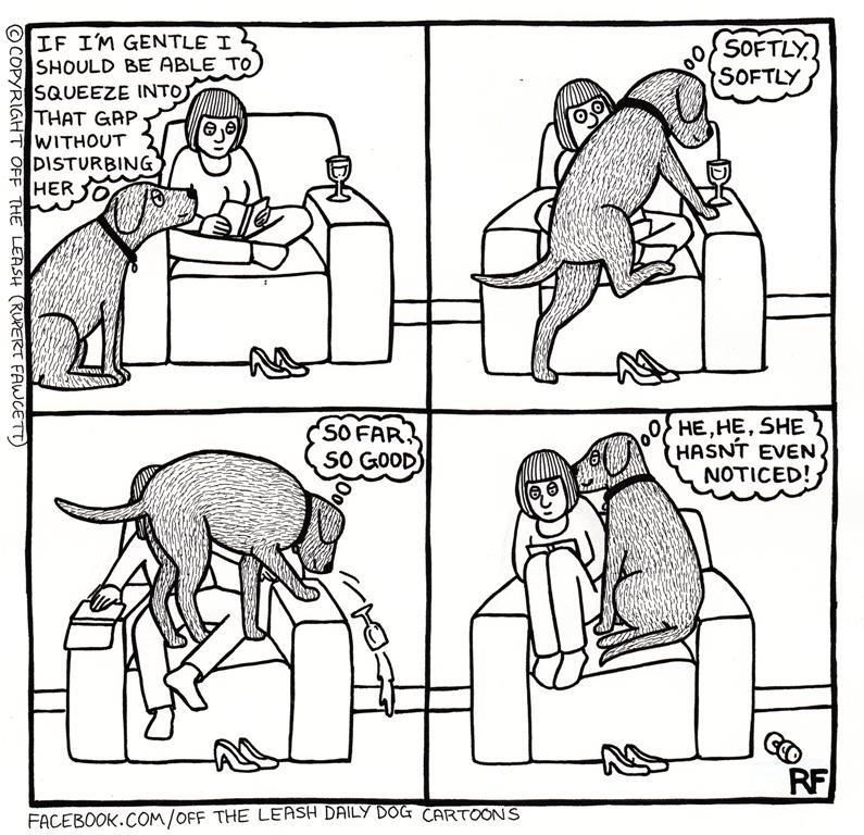 dog logic funny stuff pinterest dogs funny dogs and pets Cartoon Logic Memes dog logic except oddball pit lab heeler mix sits directly on us and he weighs about 60 lbs but thinks he s the size of a cat
