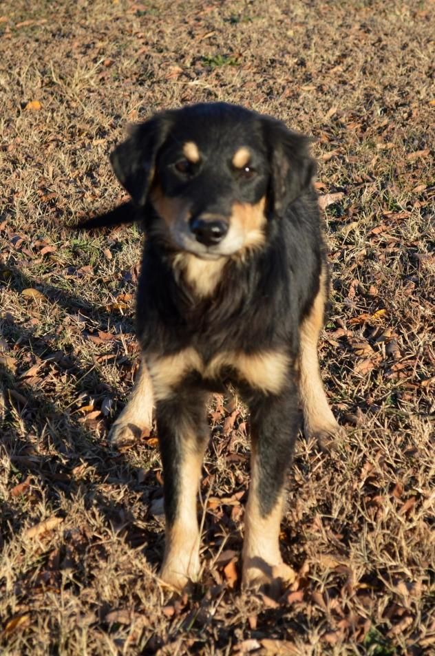 Adopt Oscar PENDING on Dog adoption, Dachshund mix, Dogs