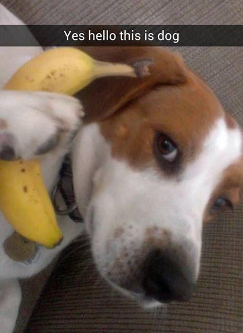hello this is dog banana. dog · banana phone hello this is o