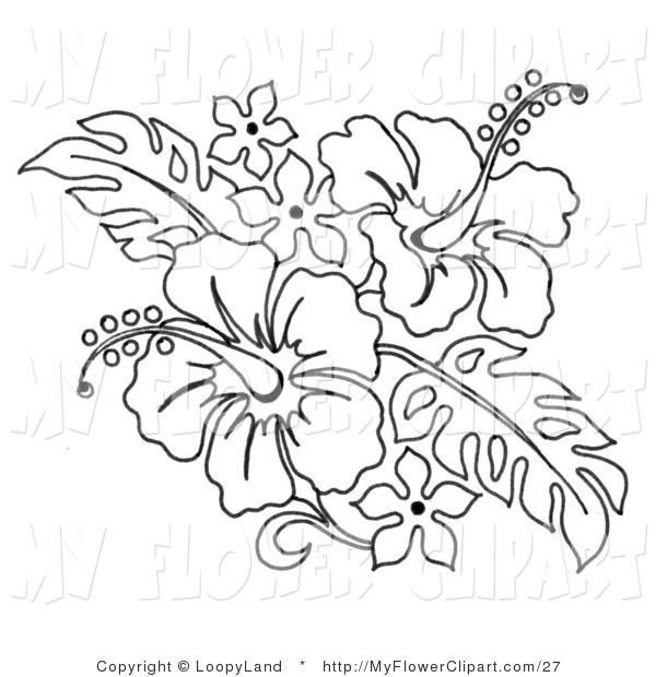 hibiscus coloring pages Clip Art of a Coloring Page of a Hibiscus - copy free coloring pages of hibiscus flowers