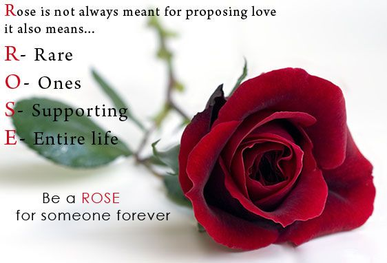 Glitter Graphics For Facebook Rose Pictures Images Orkut Scraps Graphics Happy Rose Day Wallpaper Rose Day Wallpaper Rose Day Shayari