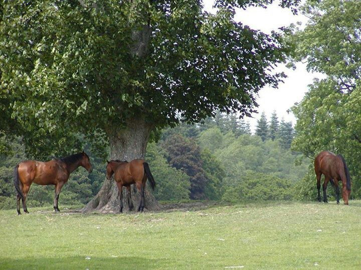 Someone once asked me what my favorite part of Summer was, i replied horses. My favorite part of every season is horses.