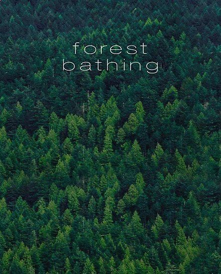 'Forest Bathing' Canvas Print by leen12