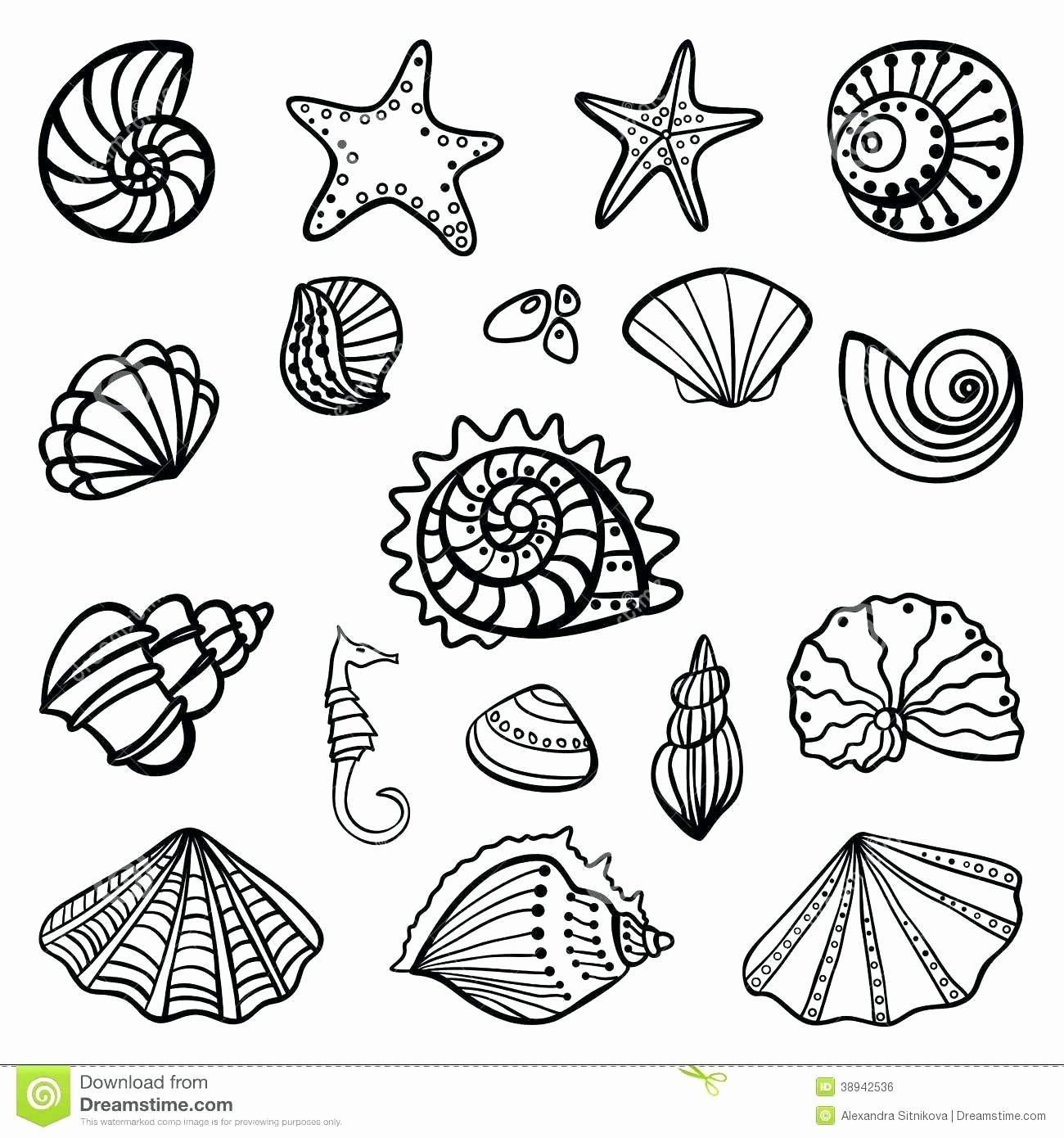 Sea Shell Coloring Page Applique Patterns Mermaid Theme