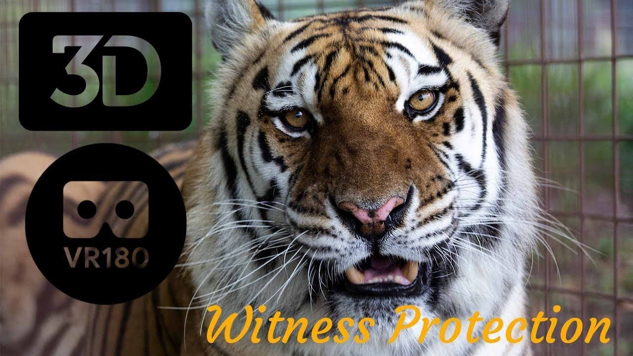 Big Cats On Witness Protection? In 3D YouTube Big cats