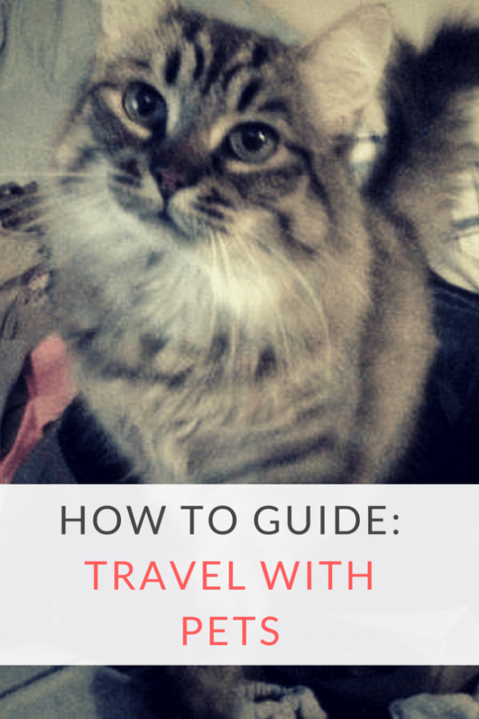 Moving Your Pet Abroad Costs Vet Documents Keeping Your Pet Calm During Your Flight Travel Pray Love Pet Travel Cat Travel Pets