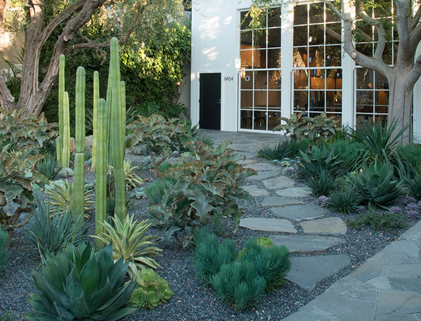 Inspirational Landscaping Ideas for Drought areas