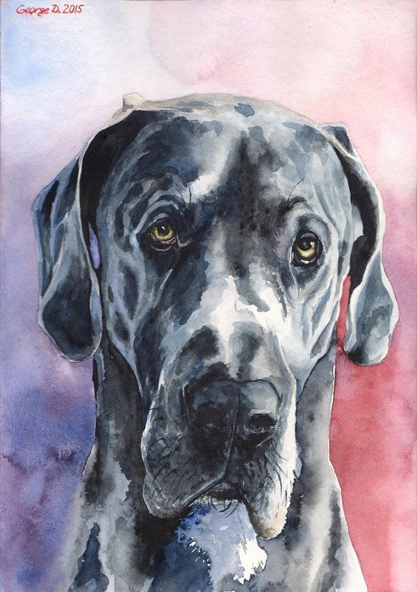 Watercolour On Daler Rowney 300g M Dog Paintings Great Dane