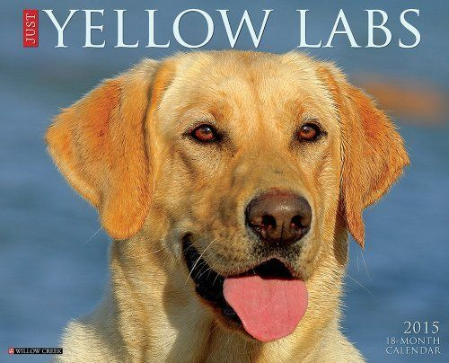 Just Yellow Labs 2015 Wall Calendar Just Willow Creek Http Www Amazon Com Dp 1623434114 Ref Cm Sw Yellow Labrador Retriever Dog Calendar Yellow Labrador