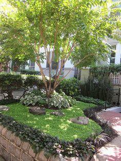 crape myrtles in gardens - google