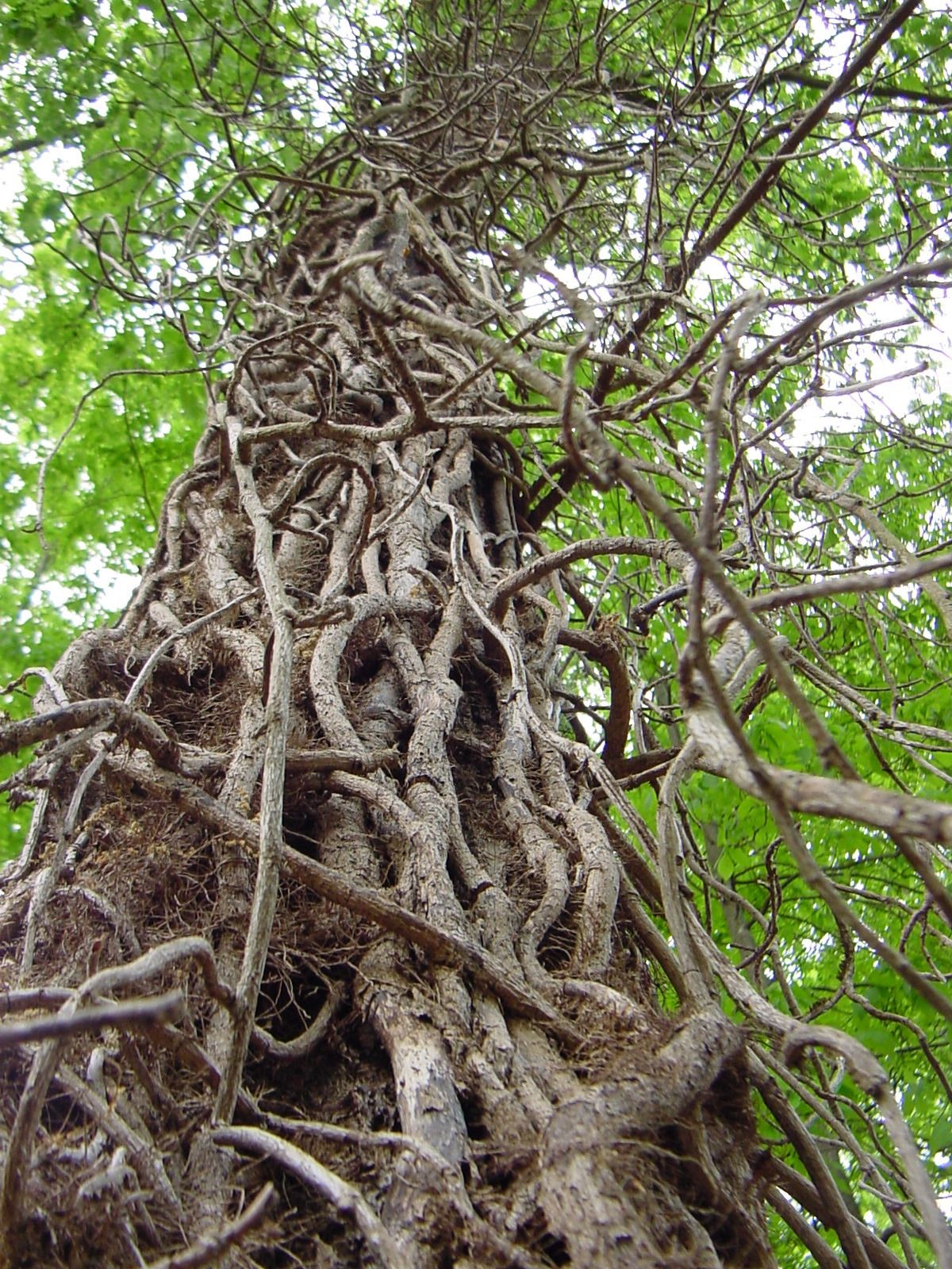 Free Plant Identification in 2020 Weird trees, Vines, Plants