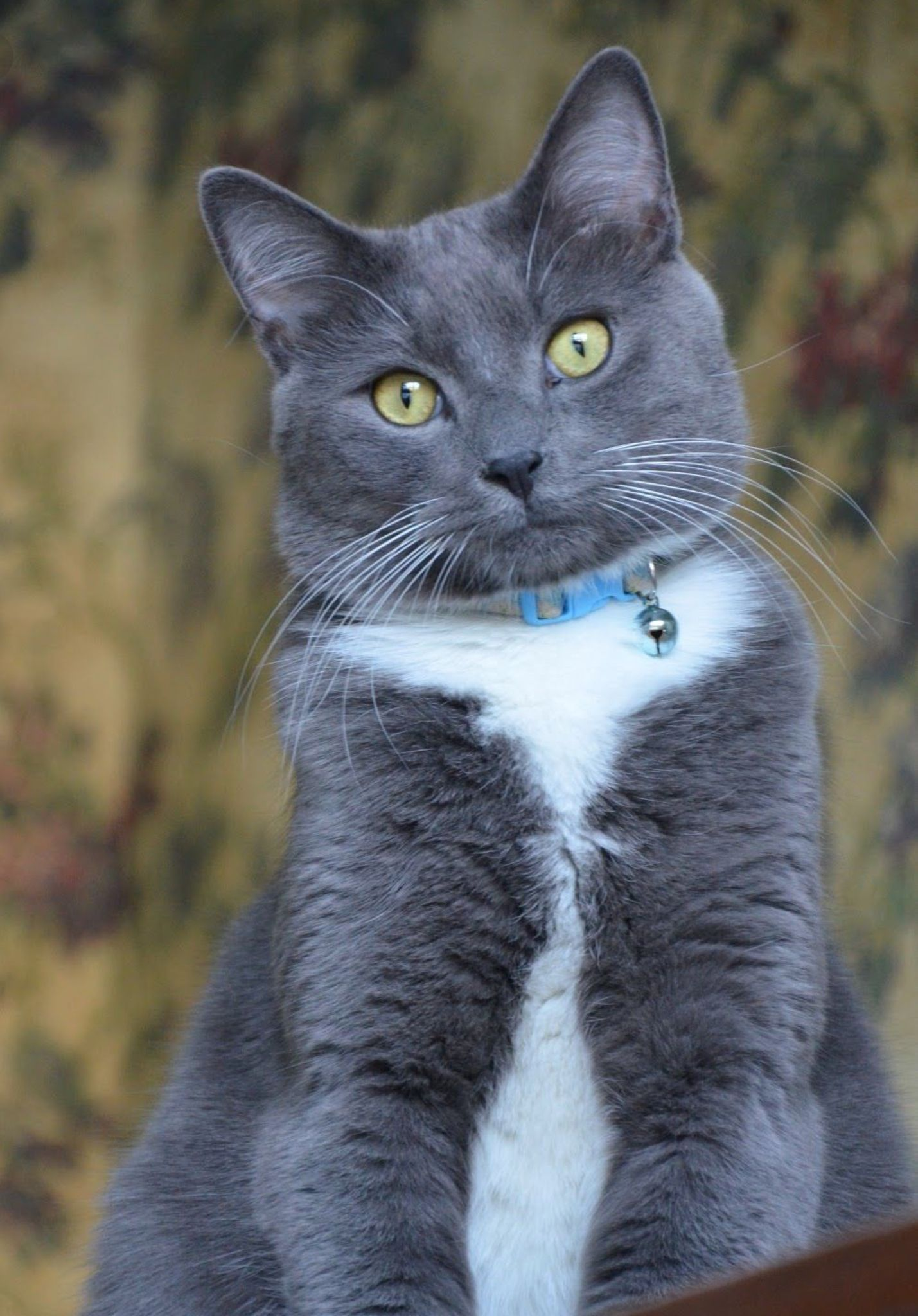Pin By Elisabeth La Pez Ruiz On Livre Cats And Kittens Grey Cats Cool Cats