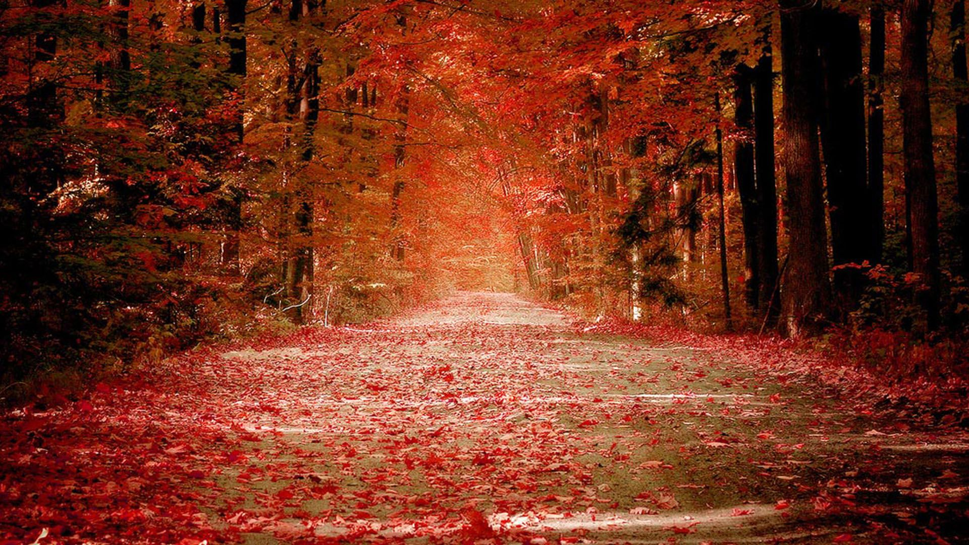 Nature Red Fall Wallpaper wallpapers Pinterest Fall