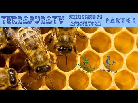 Corso di apicoltura (parte 4) - YouTube